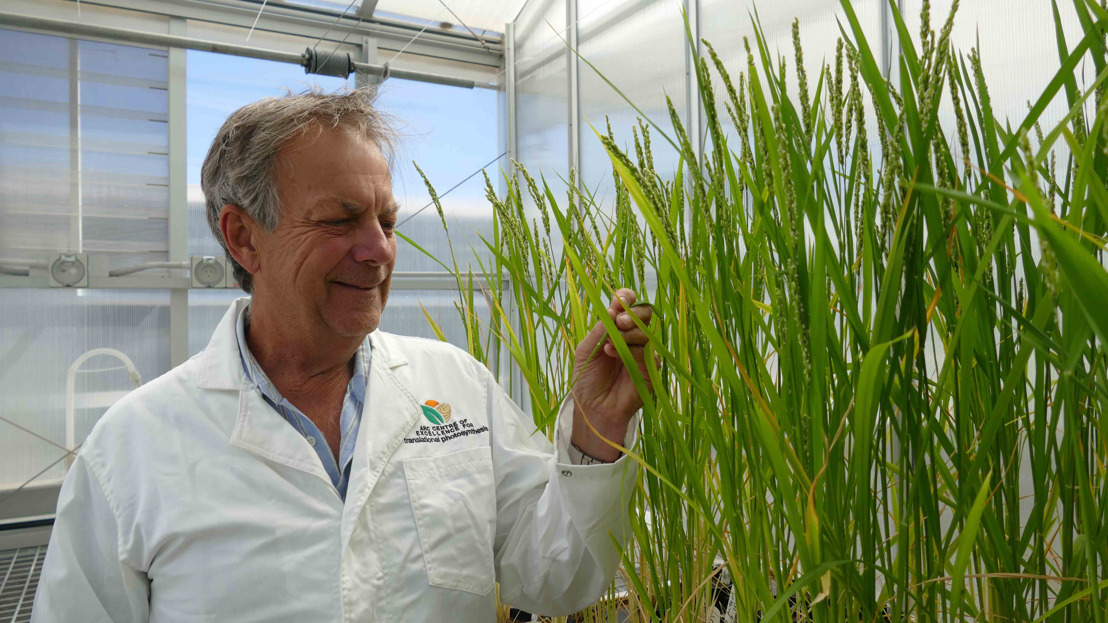 Research to turbocharge rice given major funding boost