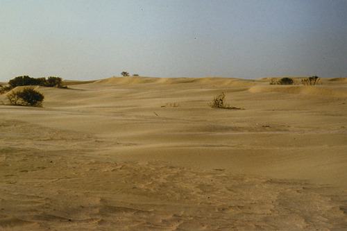 Deel van de 'Sahara' van het Westhoekreservaat hersteld