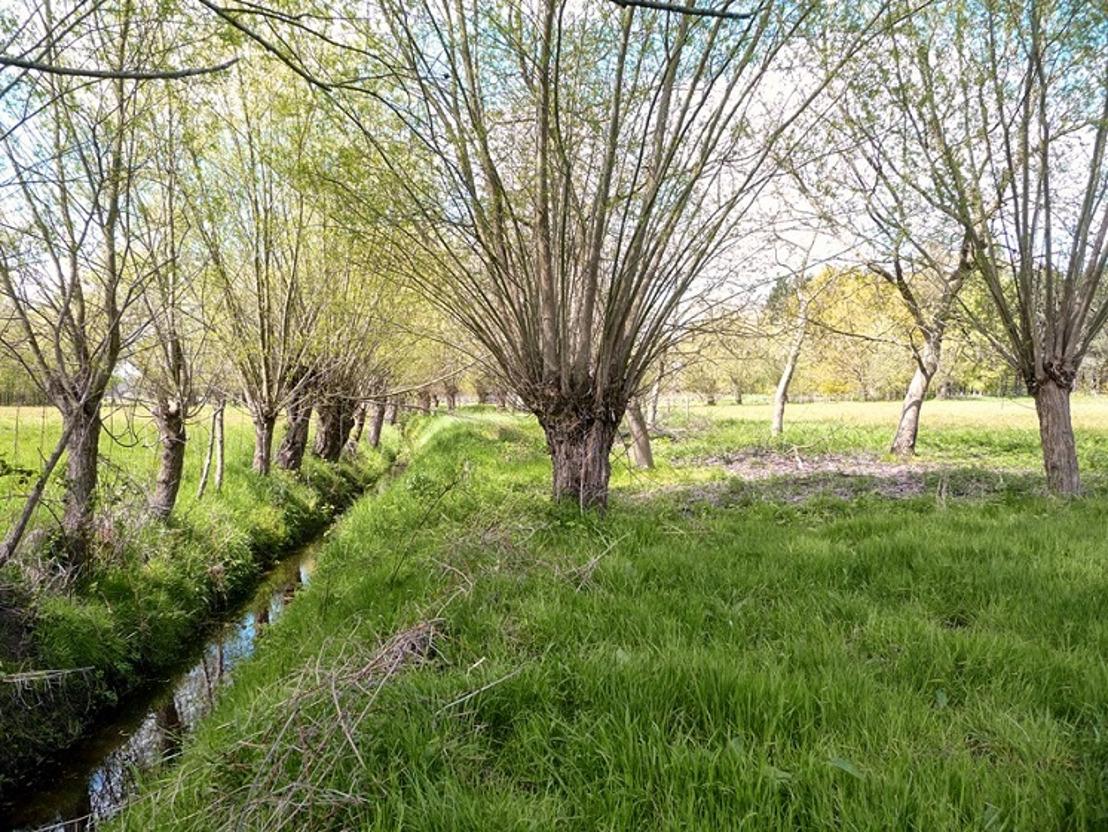 Openbaar onderzoek landinrichtingsplan 'Sint-Jansveldbeek'