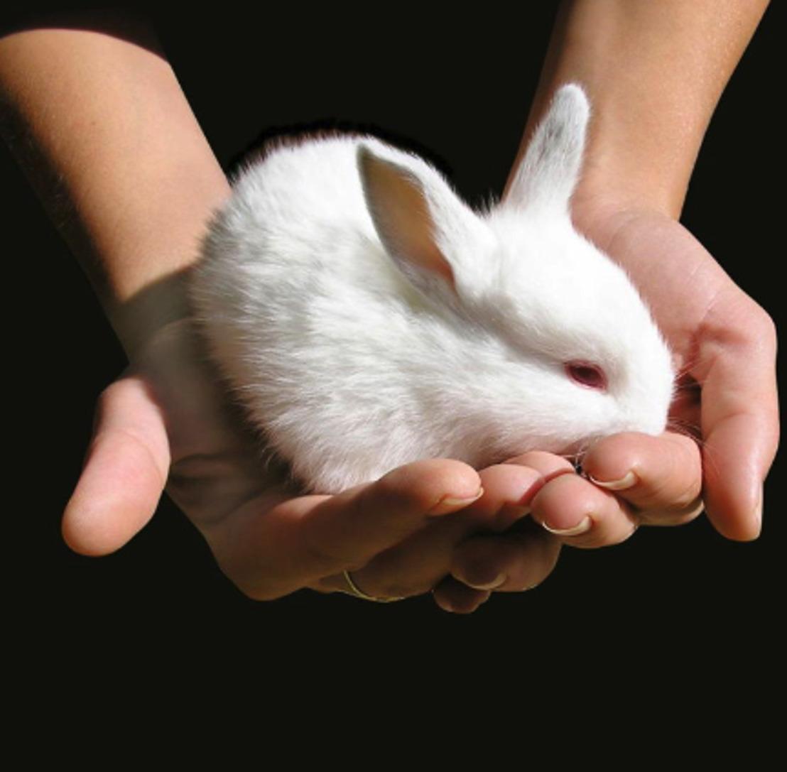 Nieuwe coalitie 'Cruelty Free Europe' beoogt einde dierproeven in Europa