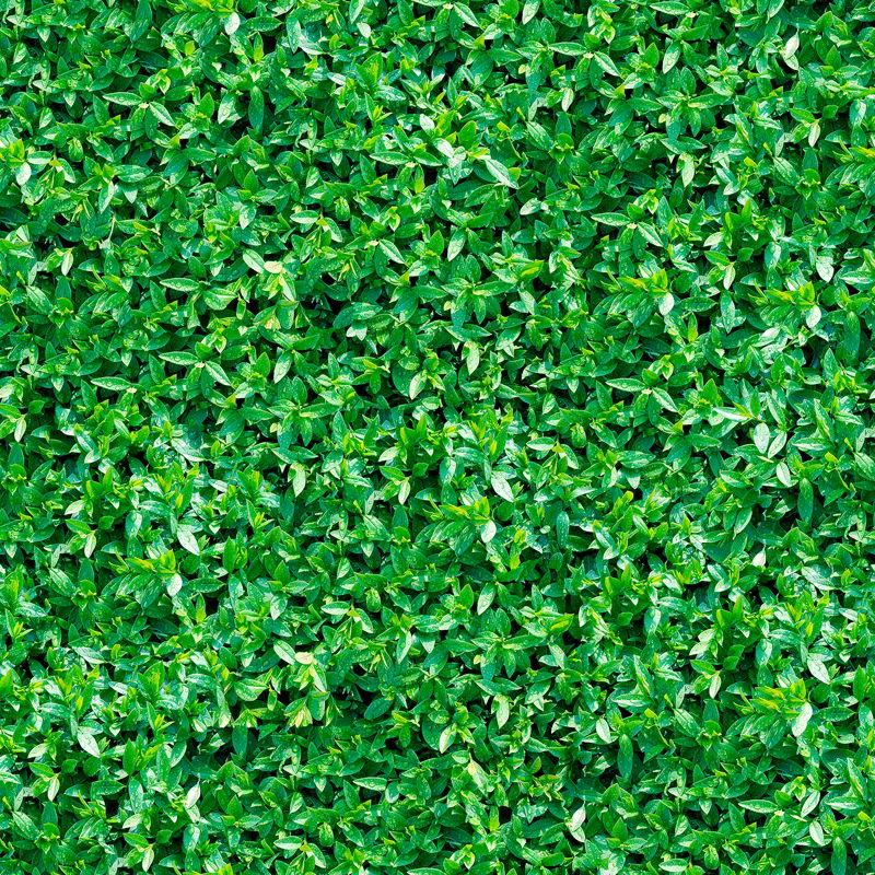 Verdure   Leaf Foliage Vinyl Flooring