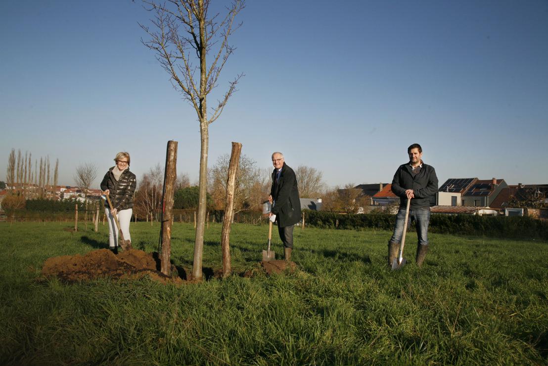 Eerste bomen en struiken in natuurpark aan de Zuunbeek in St.-Pieters-Leeuw