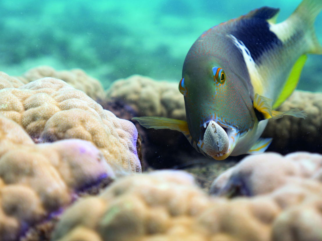Afl 1: One Ocean - (c) BBC