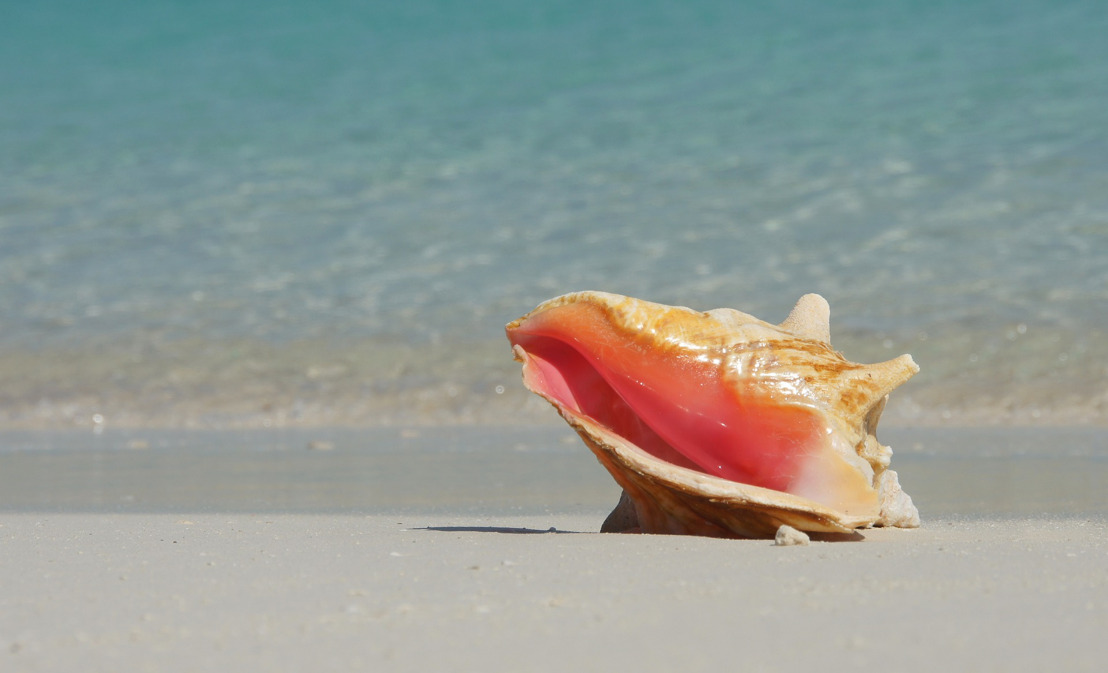OECS Launches Queen Conch 'Blue BioTrade' Project