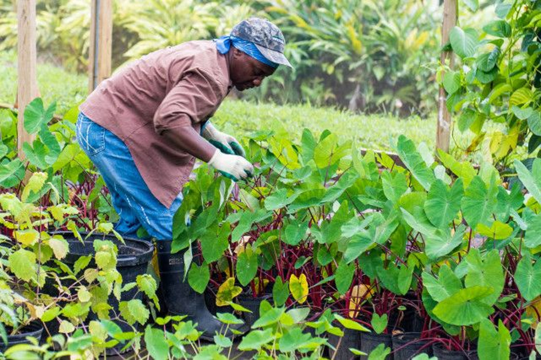 [MEDIA ALERT] Caribbean ABS Week: From Global Goals to Local Implementation