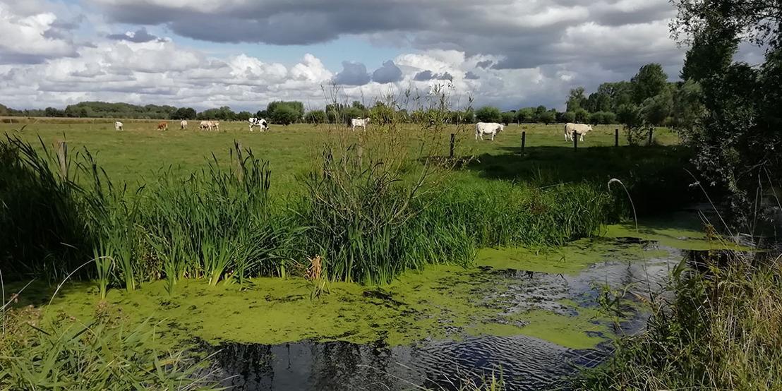 Waterkwaliteit in landbouwgebied in Vlaanderen moet beter