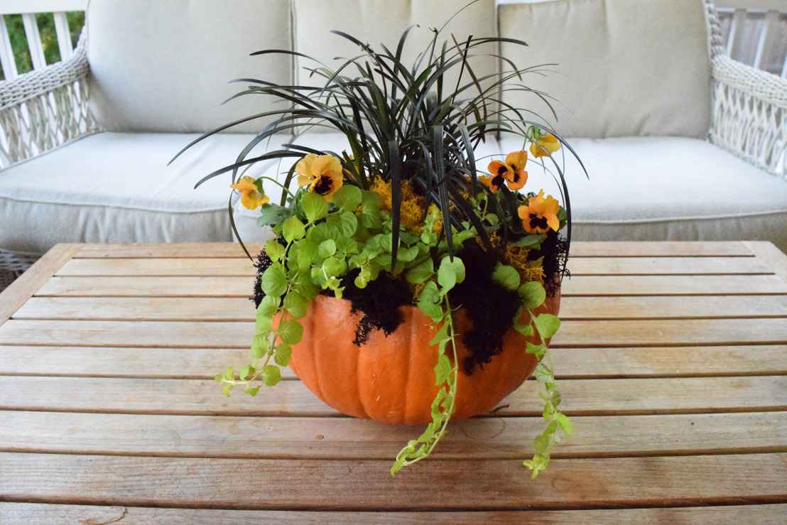 Pike Nurseries to host Pumpkin Planters Make & Take Class on Saturday, October 22