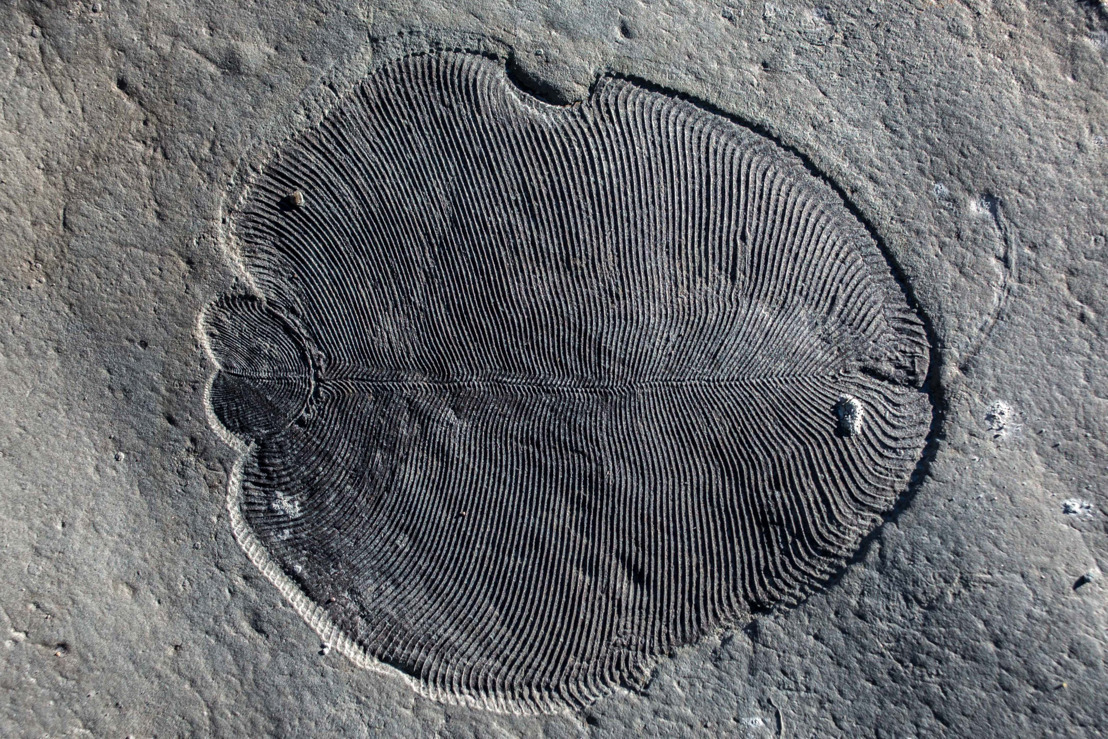ANU scientists solve mystery shrouding oldest animal fossils