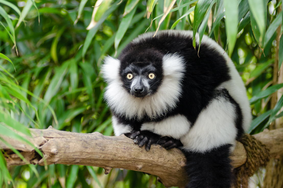 Lemur. Image: Mathias Appel, Flickr.
