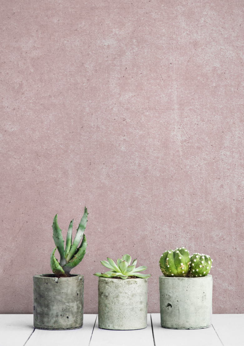 Pink Rustic Concrete Wall Mural