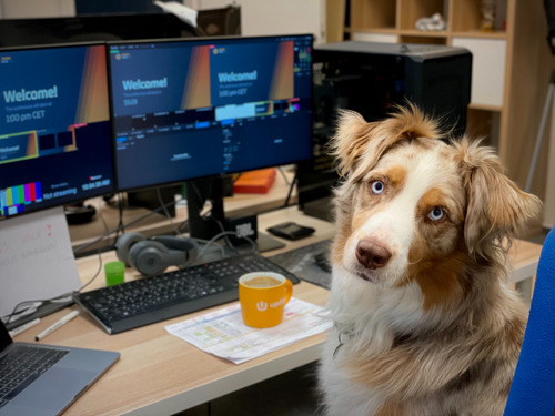 Retour au bureau: GAIA incite les employeurs à autoriser la présence d'un chien sur le lieu de travail