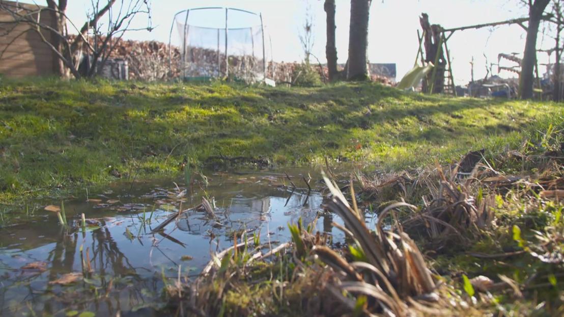 Klimaatbestendige tuinen