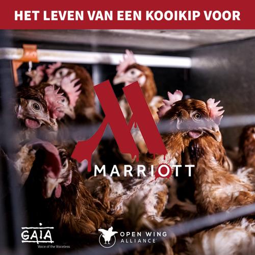 Marriott: nieuw doelwit in 'boycot-cot'campagne van GAIA