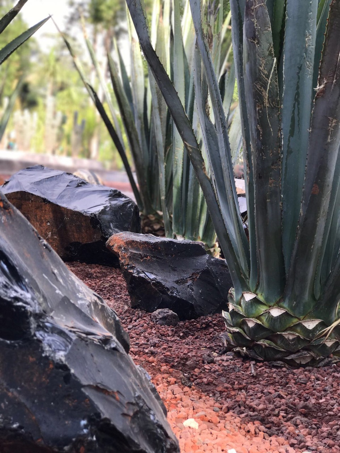 Tequila Casa Dragones recrea terroir de Tequila, Jalisco en el Jardín Botánico de Chapultepec