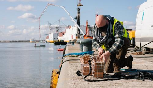 Port of Antwerp en UAntwerpen brengen aanwezigheid ongewervelde dieren in kaart