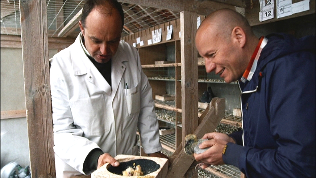 Wilde keuken aflevering 2 - Duif - Sven met duif - (c) VRT - NTR