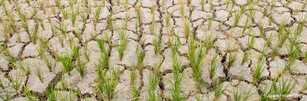 Preview: Renforcer la nature pour prévenir la pénurie d'eau