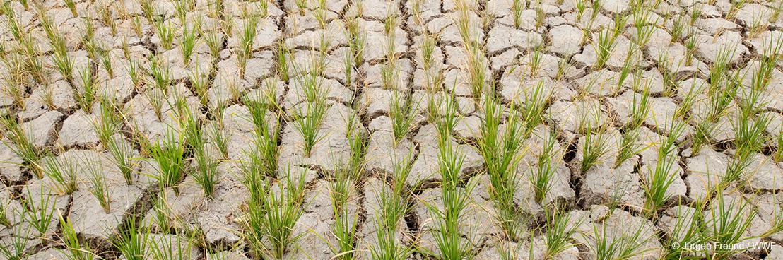 Renforcer la nature pour prévenir la pénurie d'eau