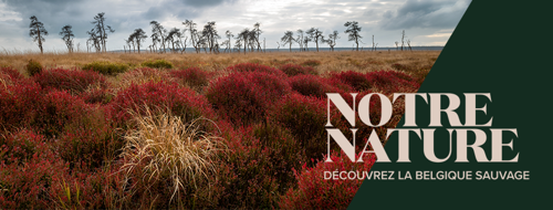 Notre Nature et Volvo découvrent la Belgique sauvage