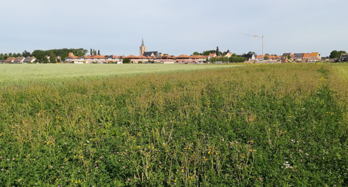 Bloemenstroken langs de Frontzate voor zeldzame grashommel