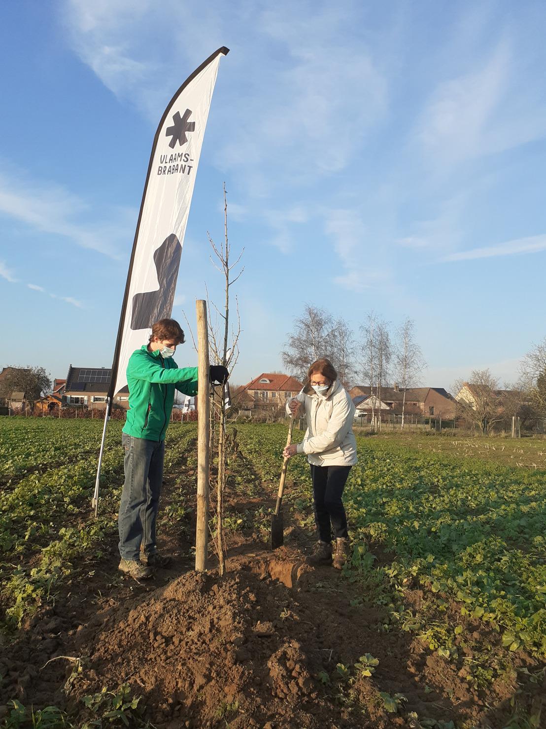 Boslandbouw op de Vlaamse kaart zetten. Proefperceel in Herent aangeplant