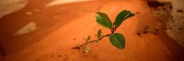 Preview: Biodiversiteit staat voor 6e massa-extinctie.