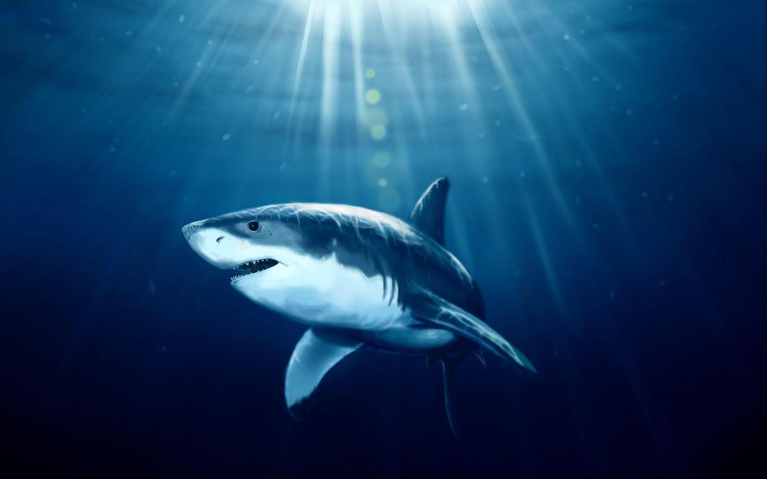"""Un """"snack"""" de acción marina: películas de tiburones de las que no podrás escapar"""