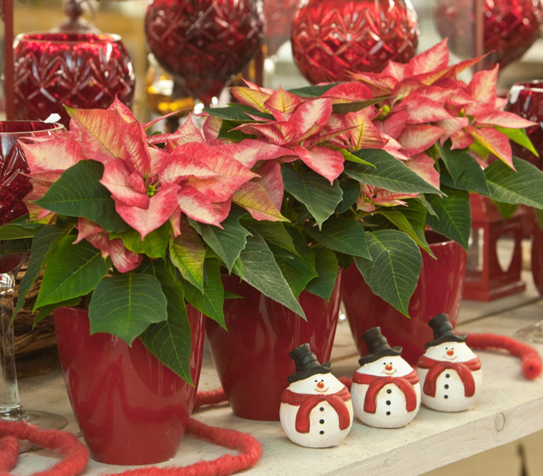 Pike Nurseries to host annual Christmas Garden Party on Thursday, December 1