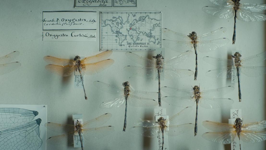 Een verzameling voor de eeuwigheid - Libellen