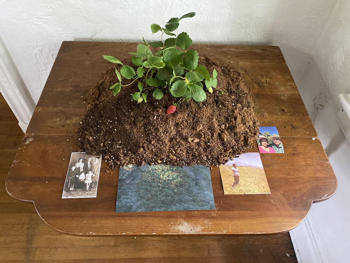 """عمل """"ستروبري فليش"""" (٢٠٢١) للمشارك في الورشة خيسوس مونيوز. جزء من معرض """"قلّة في أماكن عديدة""""، جزيرة غفرنرز، نيويورك. الصورة بإذن من پروتوسينما."""