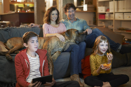 Telenet/SBS, Mediahuis, Proximus/Skynet and Pebble Media jointly set up a national sales house