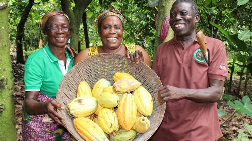 Tegen 2025 is alle cacao die Lidl België aankoopt Fairtrade