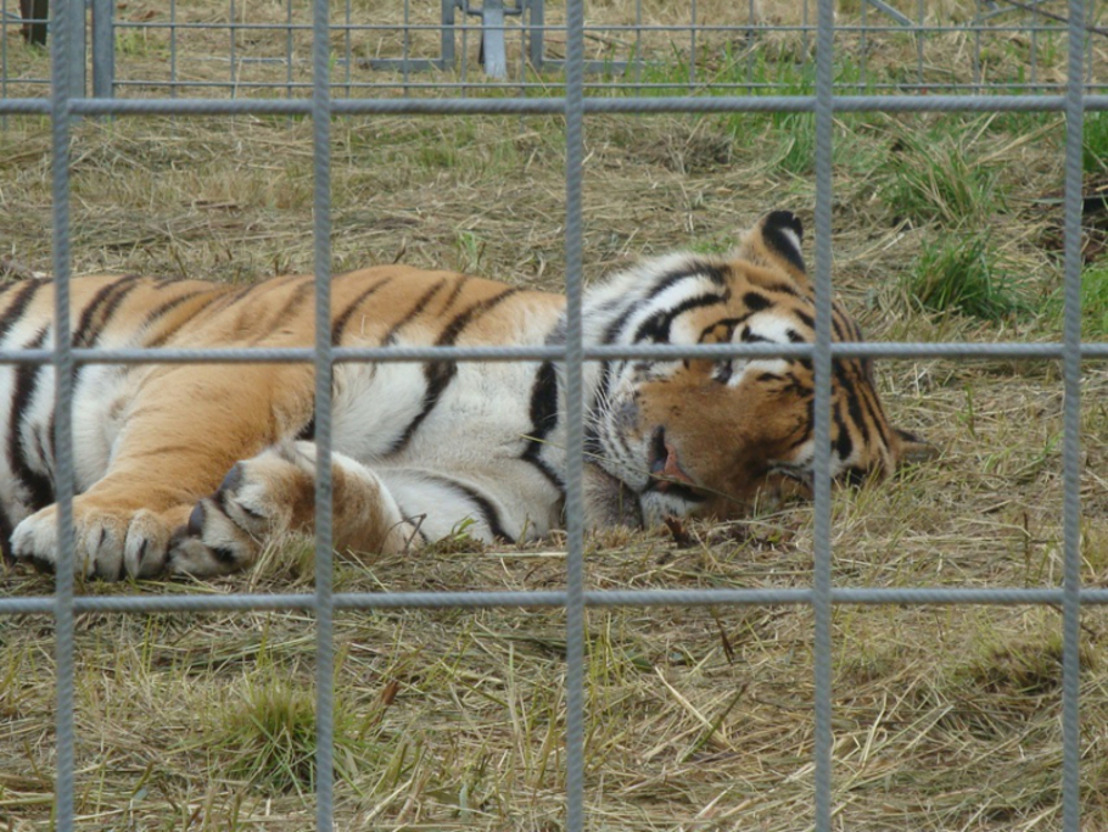 Les animaux sauvages dans les cirques restent interdits
