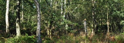 Butselbos in Vlaams-Brabant breidt met 57 ha uit