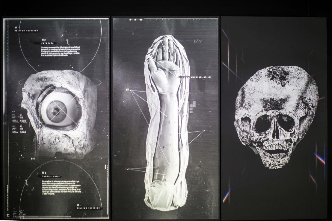 La proyección de un tríptico de animaciones con imágenes de alto impacto, es la tercera de las piezas que Toloache creó para este espacio. El uso de archivos GIF, populares en redes sociales, propone un juego que busca la complicidad de los visitantes.