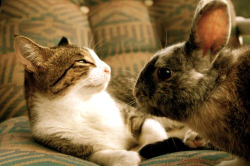 GAIA geeft pluim aan Brussels Gewest: dieren krijgen bijzonder bescherming