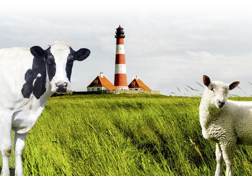 Bauernverband Schleswig-Holstein setzt auf Energie von e.optimum