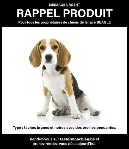 GAIA à l'occasion de la Journée mondiale des animaux de laboratoire, 24/4 : Lancement du site web www.testssuranimaux.be et appel à l'arrêt des expériences envahissantes sur les chiens et les chats en bonne santé