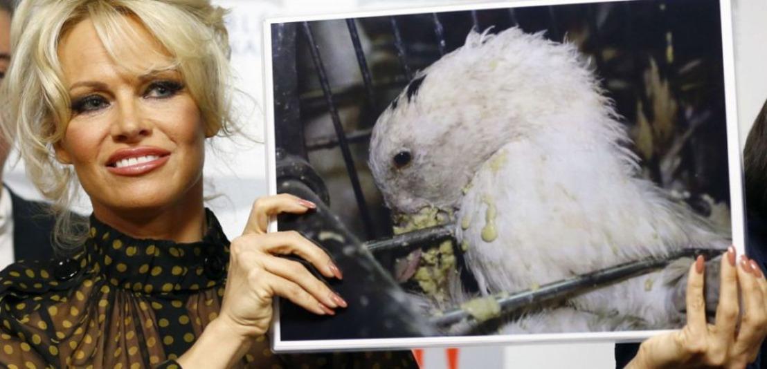 Pamela Anderson adresse une lettre à Ben Weyts