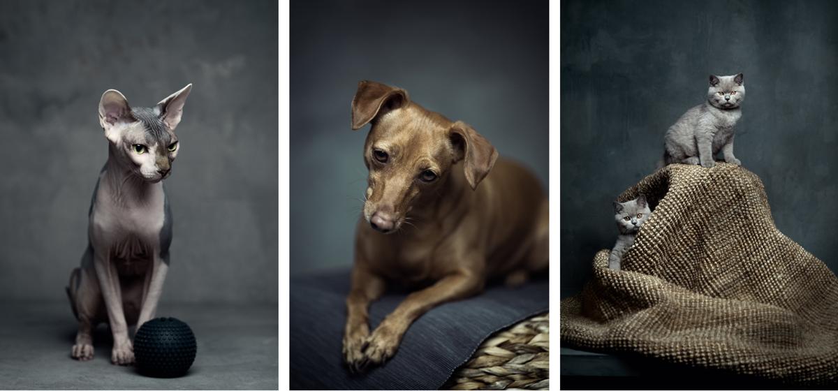 ikea lance lurvig la collection pour chiens et chats que tout le monde attendait. Black Bedroom Furniture Sets. Home Design Ideas
