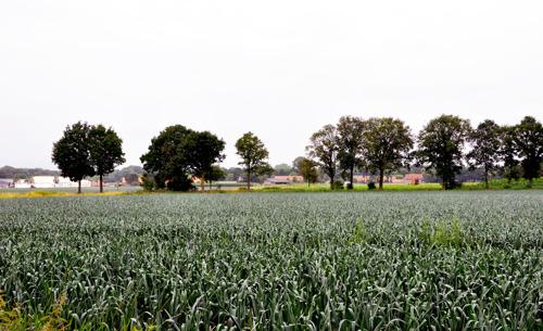 Ruilverkaveling moet landbouwstructuur Molenbeersel verbeteren