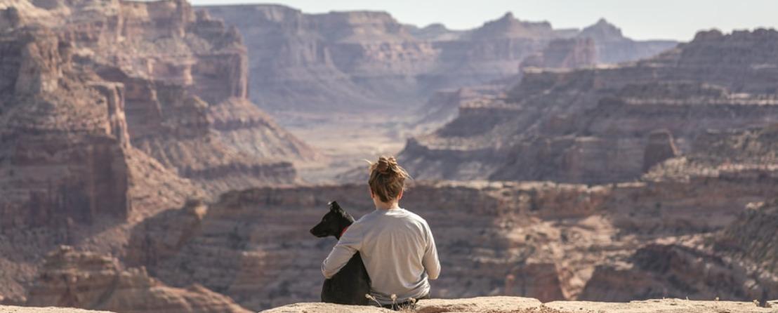 Cómo viajar con tus mascota sin morir en el intento