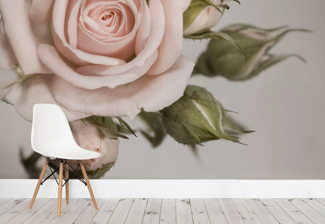 Elegant Pink Rose Wallpaper Mural