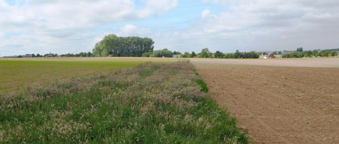 Rechtszekerheid voor grasstroken in beheerovereenkomst: geen scheurverbod na vijf jaar
