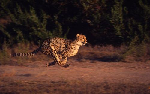 Olympische Spelen? Wilde dieren verpulveren onze wereldrecords!