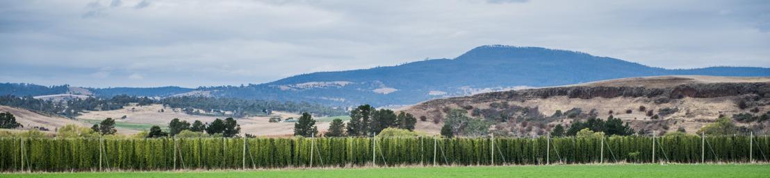 Leffe Royale Ella - les houblonnières de Tasmanie dans votre verre