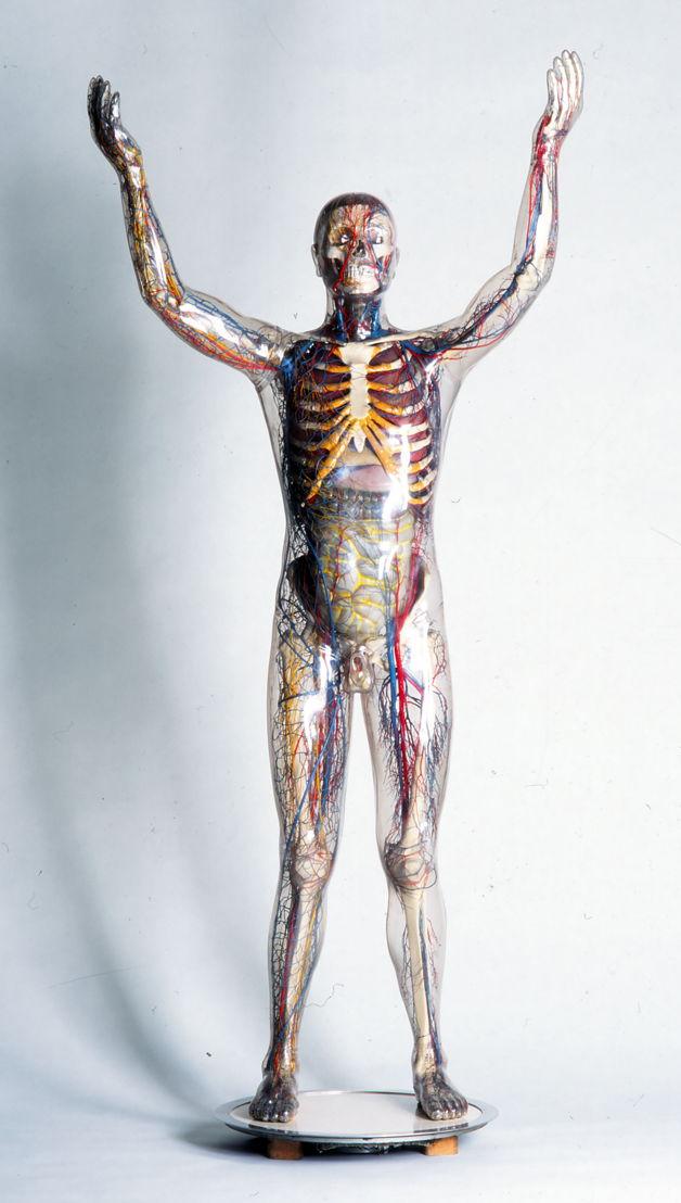 Franz Tschackert, Homme en verre, 206 x 98 cm, Dresden, 1930 © Deutsches Hygiene Museum - Volker Kreidler 1962