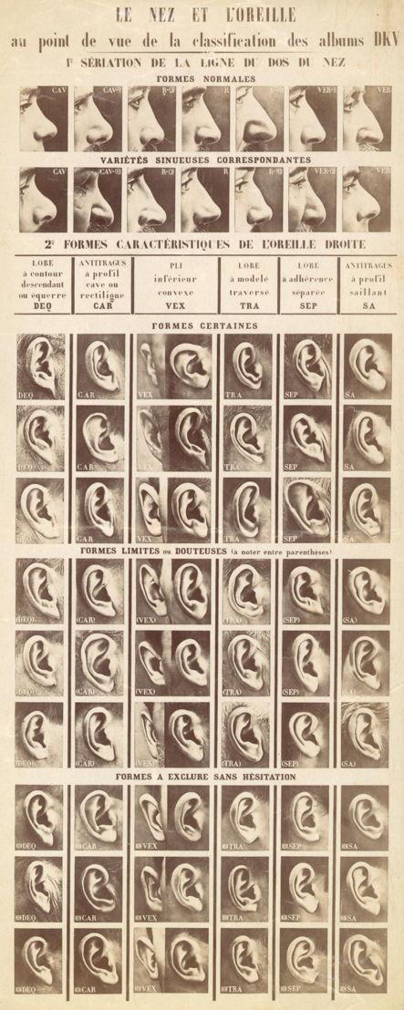 Collection In Transit - Service De L'Identité Judiciaire (FR), Le nez et l'oreille au point de vue de la classification des albums DKV, 1903. Albumen paper print, P/1984/215/4.