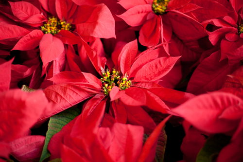 Preview: Pike Nurseries provides home and garden hacks for ho-ho holiday season