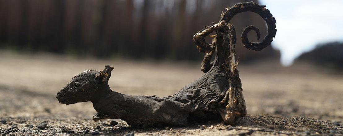 WWF : 3 milliards d'animaux victimes de la crise des feux de forêts en Australie